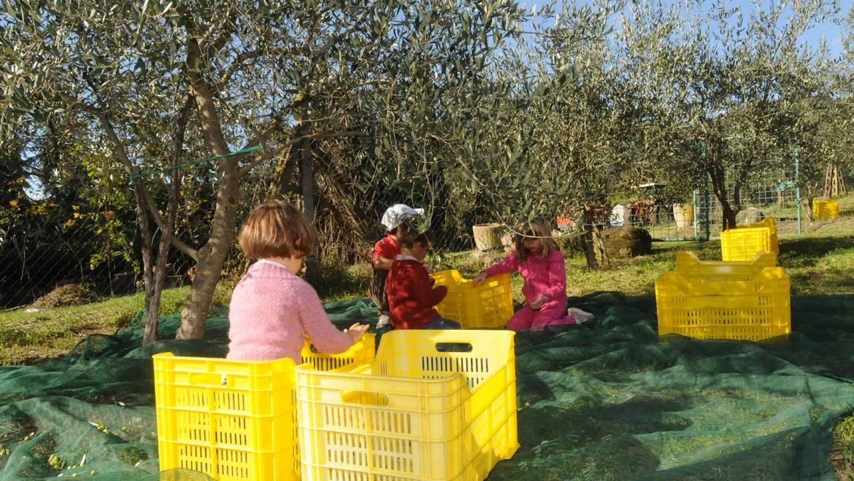 L'olio extravergine di oliva di qualità e l'alimentazione dei bambini