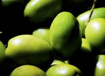 Olio Extravergine di Oliva: l'alleato delle mamme nella nutrizione dei bambini