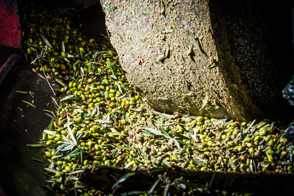 macina-olive-pugliesi
